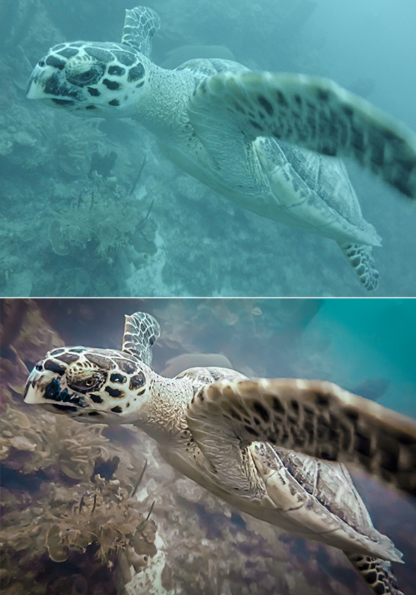 Turtle before and after