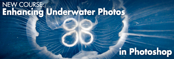 Enhancing Underwater Photos with Photoshop