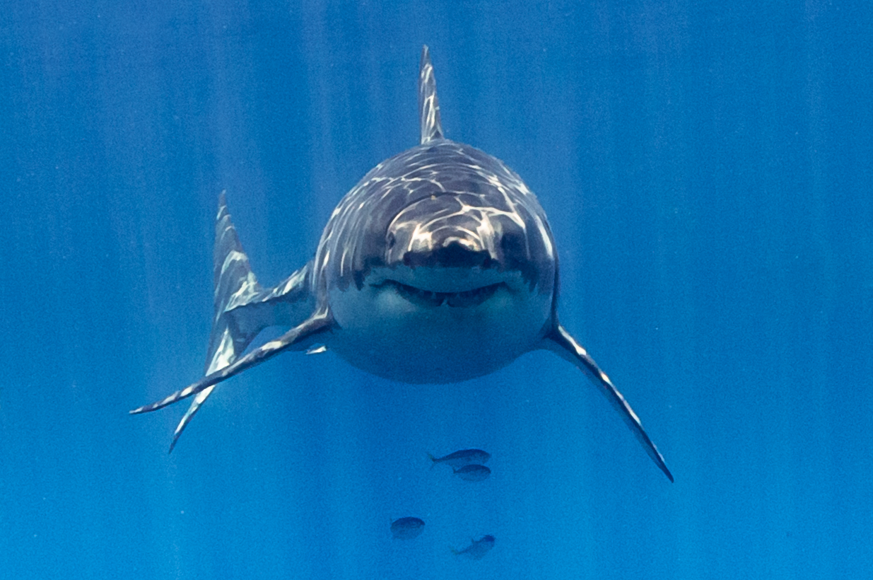 A happy shark is as a happy shark does