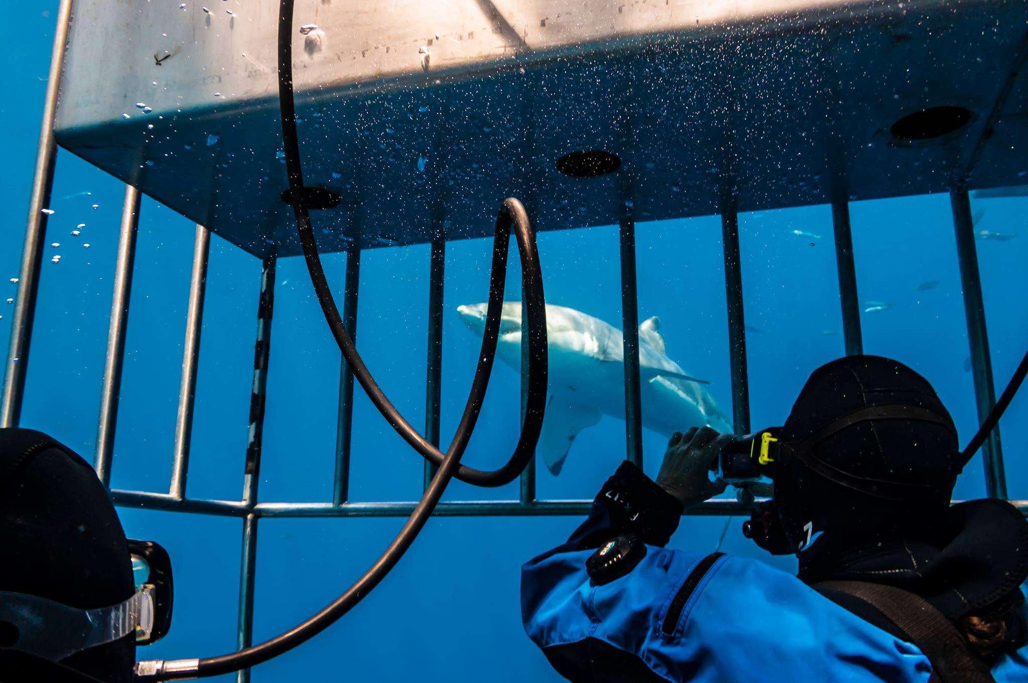 Colleen and her GoPro inside a human cage with sharks at large.