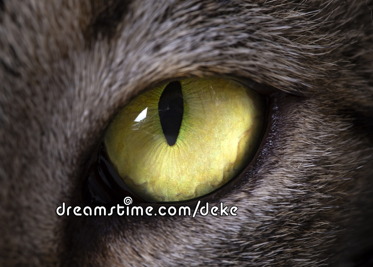 A close up cat eye from Dreamstime.com