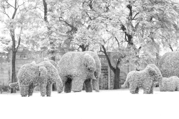 A snowy infrared effect created in Photoshop