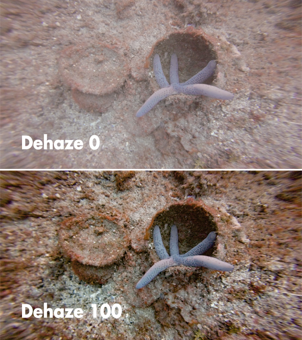 Sea star before and after dehazing
