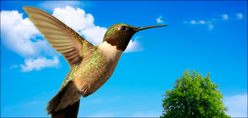 The hummingbird from last week's video