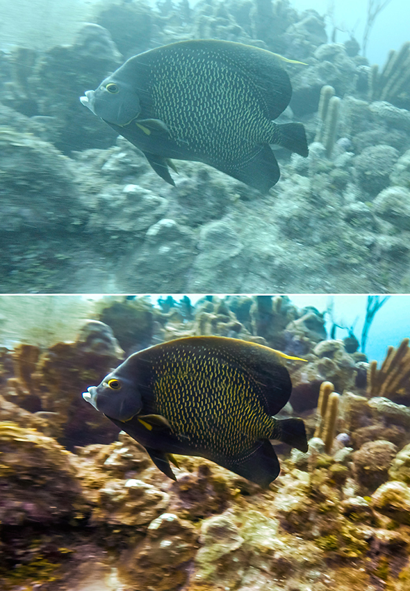 Angelfish image before and after