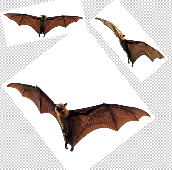 Some adorable bats to add to our Halloween composite