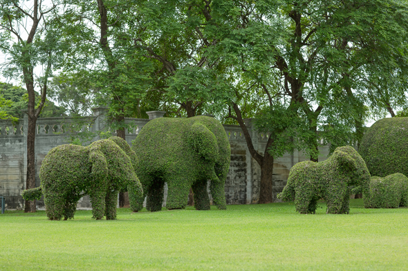 Topiary elephants before